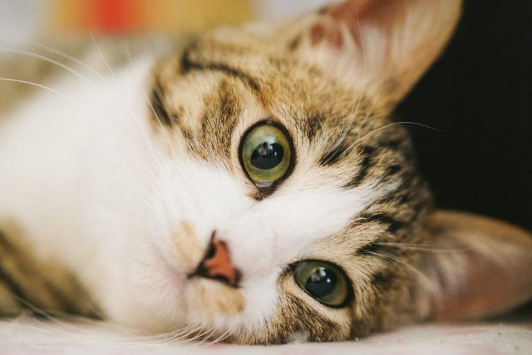 猫・ネコ・cat